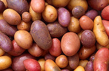 Varieties of potato